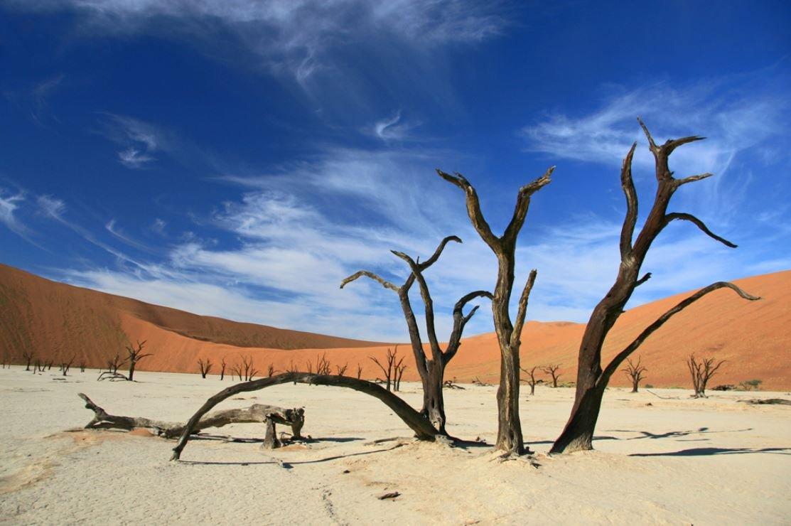 « Namibie. Dead Vlei, un cimetière d'arbres morts il y a plus de 900 ans entouré des dunes de sable rouge les plus hautes au monde. Un de mes paysages préféré. » - Penda Diouf